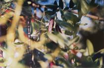 Thomas Harndt, Dahme bei Grünau, Öl auf Leinwand, 2000.