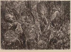 Historia Naturalis: Verwelkte Pflanzenwelt